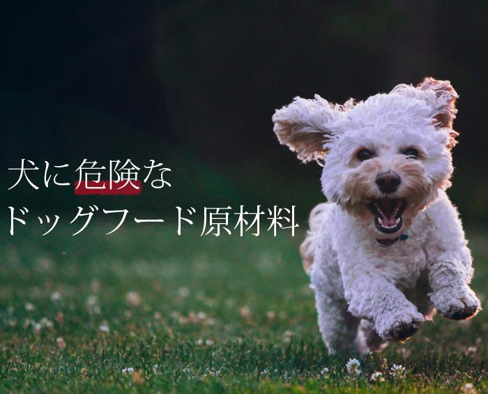 犬に危険なドッグフード原材料