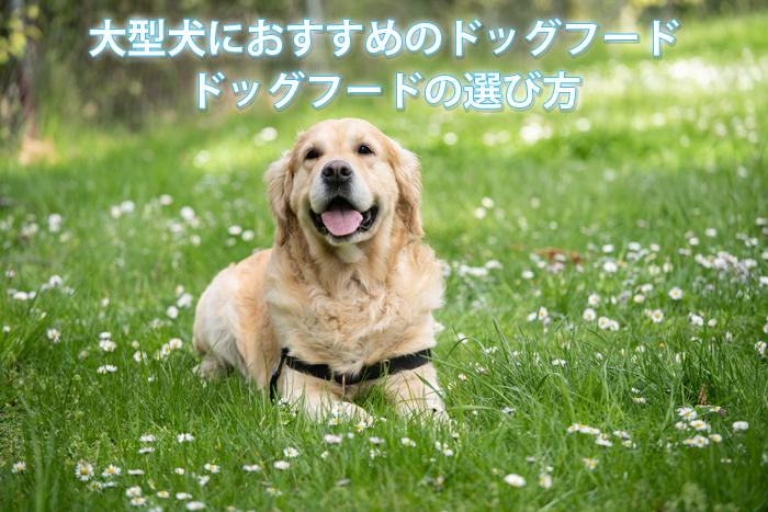 大型犬におすすめのドッグフード&選び方
