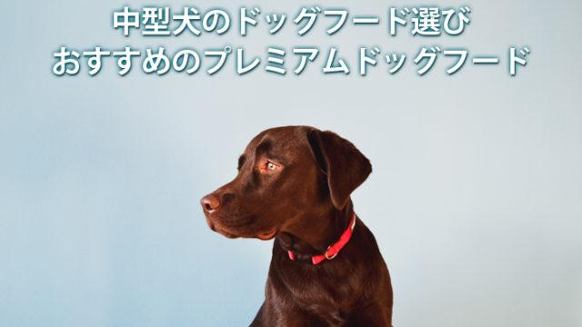中型犬のドッグフードの選び方&おすすめのプレミアムドッグフード